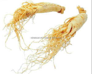 Natural Ginseng (Class A)
