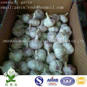 Hot Selling Fresh Normal White Garlic Size 5.0cm