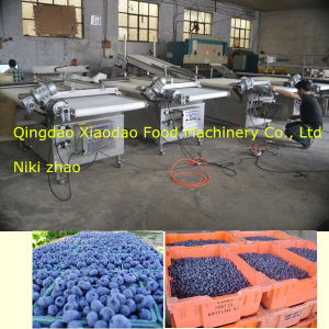 Blueberry Sorting Machine/ Blueberries Grading /Classify Machine pictures & photos