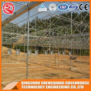 Commercial Graden Polyethylene Plastic Film Greenhouse pictures & photos