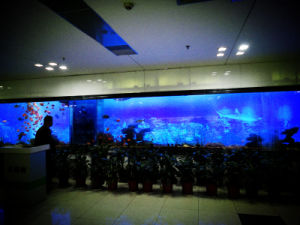 Fashionable Acrylic Fish Tanks pictures & photos