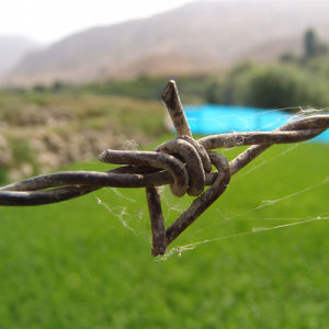 Cheap Galvanized Barbed Wire From China pictures & photos