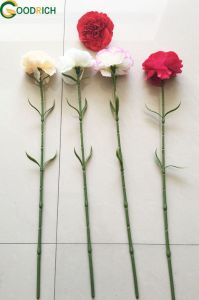 Single Carnation for Decoration pictures & photos