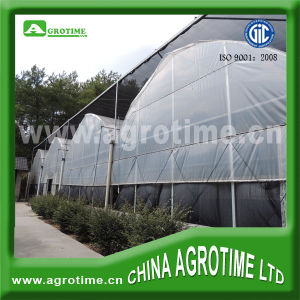 Agricultural Multi-Span Film Greenhouse (CMR8060)