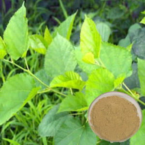 98% Mulberry Leaf Extract/1-Dnj pictures & photos