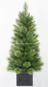 Christmas Tree pictures & photos