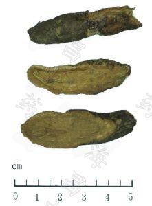 Garden Burnet Root / Radix Sanguisorbae