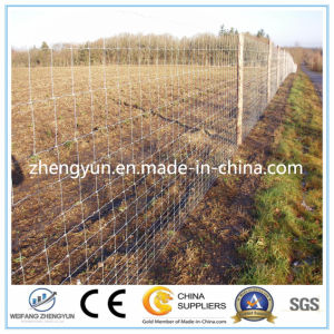 Galvanized Steel Wire Field Fence pictures & photos