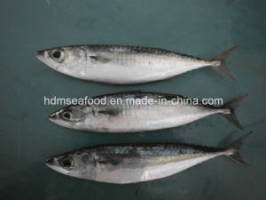 Frozen Seafood Mackerel Fish for Sale pictures & photos