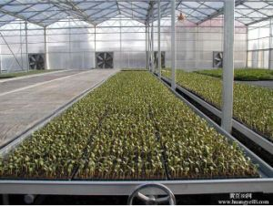 Multi Span Plastic Sheet Greenhouse for Sale pictures & photos