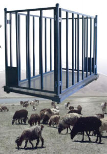 Animal Scale for Sheep, Cattle, Pigs pictures & photos