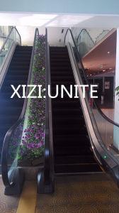 Escalator Comercial pictures & photos