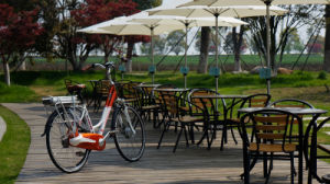Buy Low Price High Quality 250W Woman Electric City Bike in China pictures & photos