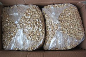 AAA Grade Roasted and Salted Peanut Kernels 35/39/Fried Peanut Kernels pictures & photos