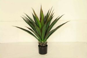 High Quality of Artificial Plants of Agave Jf12010556 pictures & photos