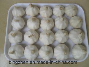 Garlic pictures & photos