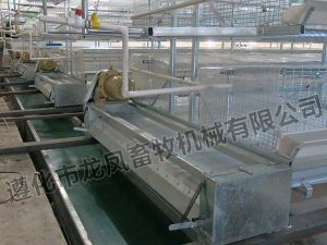 Galvanized H Stype of Automatic Broiler Cage