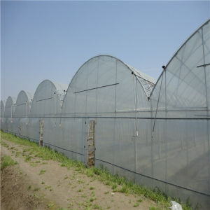 Multi-Span Plastic Film Greenhouse Helen pictures & photos