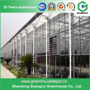 High Quality Glass Venlo Greenhouse with Cooling System pictures & photos