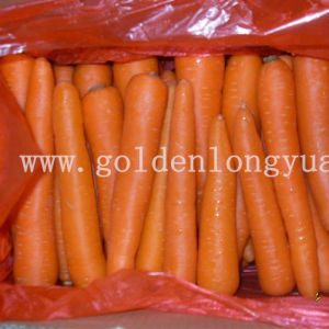 Exporting New Crop Fresh Carrot pictures & photos