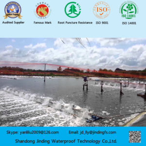 0.5mm HDPE Geomembrane Used on Shrimp Farm pictures & photos