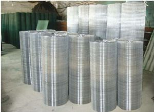 Electric Galvanized Welded Wire Mesh Yd-Wwm-Gal pictures & photos