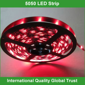 SMD 5050 Flexible Light LED Strip 24V