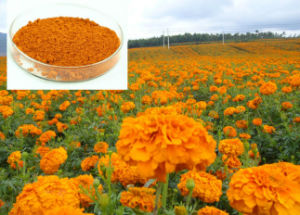 Natural Marigold Extract, Natural Marigold Extract Lutein, Lutein and Zeaxanthin pictures & photos