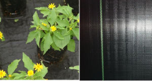 PP Weed Mat/PP Ground Cover Manufacturer with Competitive Price and Reliable Quality pictures & photos