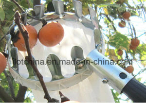 Ilot Detachable Mesh Head Fruit Picker with Muslin Bag pictures & photos