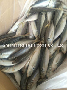 Hot Selling Frozen Fish Yellow Tail Scad 6-8PCS/Kg pictures & photos