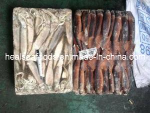 Board Frozen Illex Squid 100-150g pictures & photos