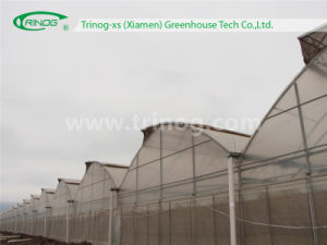 Commercial Film Greenhouse for Vegetable pictures & photos