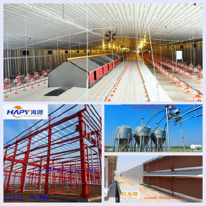 Poultry House Construction with Automatic Machinery in One Stop Service pictures & photos