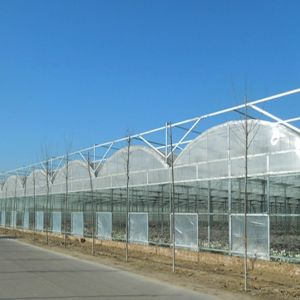 Commercial Multi Span Film Production Greenhouse for Vegetable pictures & photos