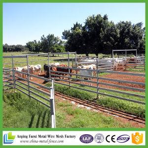 Cheap Hot DIP Galvanized Livestock Cattle Panel for Australia Price pictures & photos