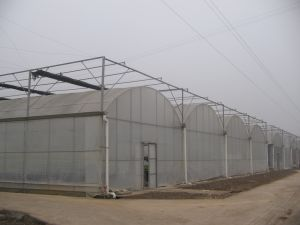 China Manufacture Multi-Span Greenhouse for Tomato Planting pictures & photos