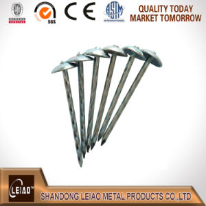 Best Quality Unberlla Head Roofing Nails pictures & photos