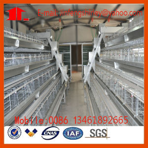 High Quality Automatic Poultry Equipment Chicken Cage for Layers (9LDT-5-1L0-25) pictures & photos