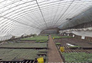 Solar Greenhouse pictures & photos