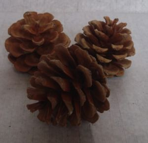 Round 4-6cm Nature Pine Cone for Decoration (LSALICE-13)