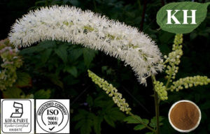 High Quality Black Cohosh Extract Triterpenoid Saponins 2.5%, 5%, 8% HPLC pictures & photos