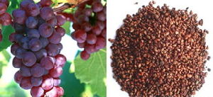 Grape Seed Extract-Procyanidin 95% UV / Polyphenols 80% UV
