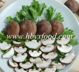 Canned Mushroom Slices pictures & photos