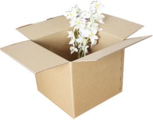 Storage Carton