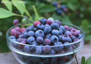 Blueberry Vacuum Freeze Dryer/Blueberry Freezing and Drying Machine pictures & photos