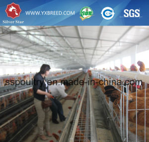 Factory Outlet Automatic Broiler Battery Cage for Sale pictures & photos