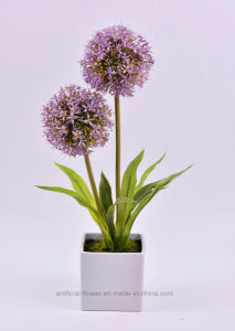 Handmade Onion Stem Plants in Square Ceramic Pot for Public Decoration pictures & photos