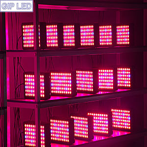 9 Wavelength Bands Hydroponic Growing Systems 300W LED Grow Light pictures & photos