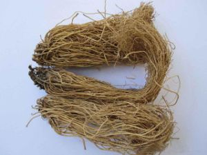 Manchurian Wildginger Herb Extract /Asarum Extract /Asarum P. E pictures & photos